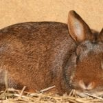 Deilenaar Rabbit Care Sheet