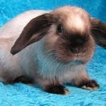 Sallander Rabbit Care Sheet