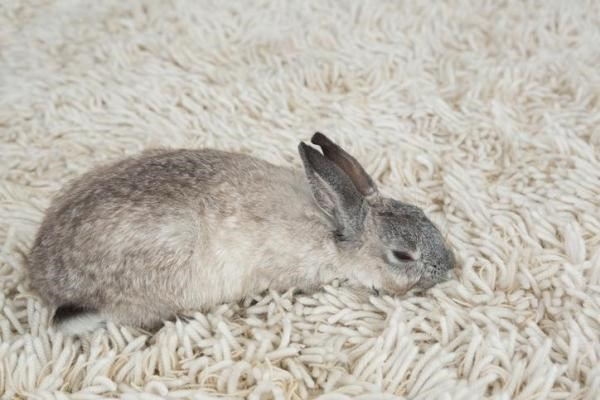 Image result for Rabbits Mourning the Loss of the Babies