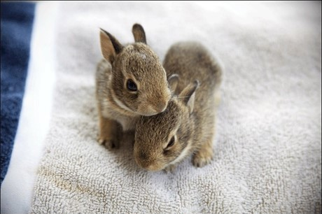 When Do Baby Bunnies Leave The Nest?