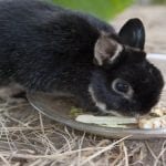 What To Do When Your Rabbit Is Not Eating