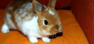 What Does Your Rabbit's Orange Pee Mean?