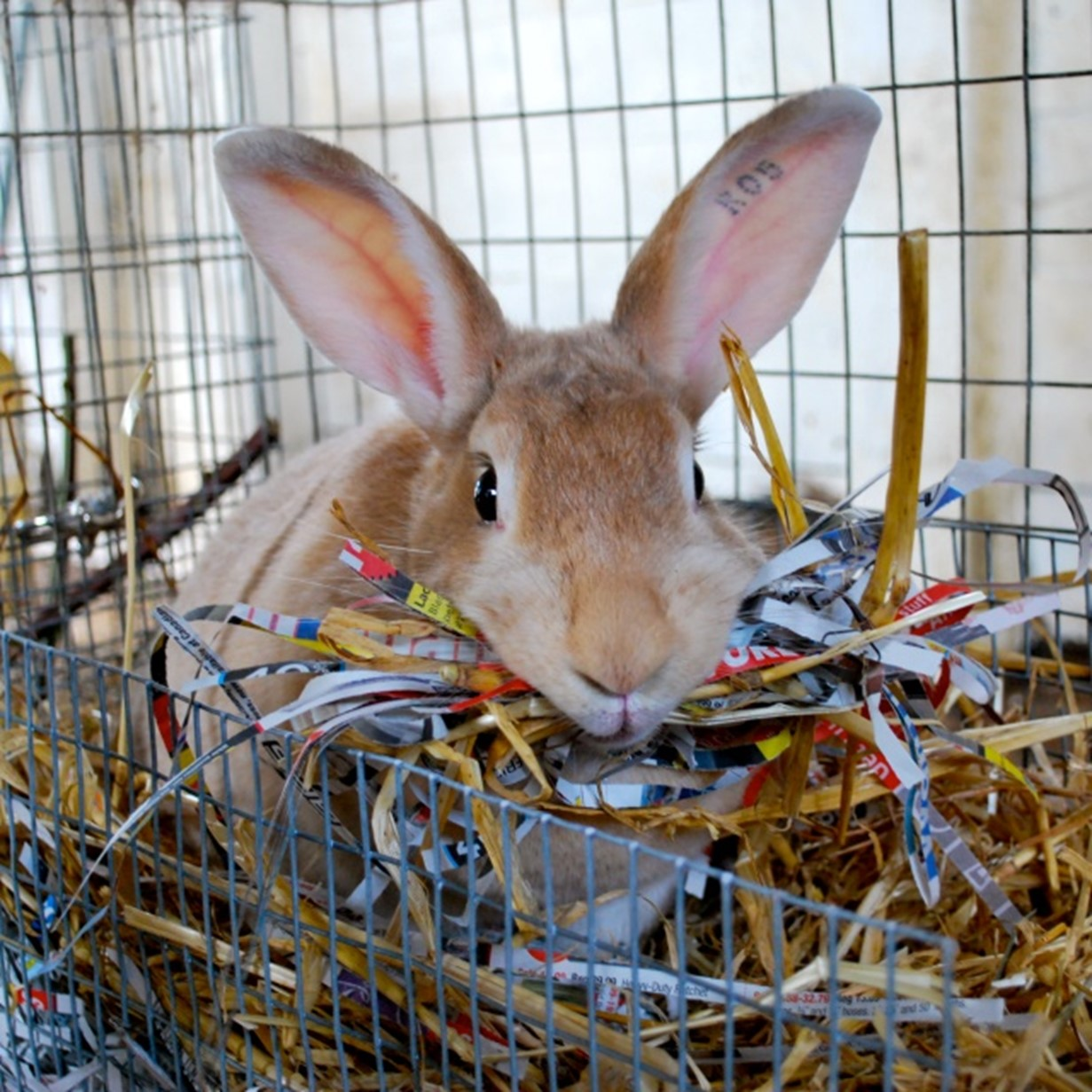 Are Pine Shavings Good For Your Rabbit's Shelter   Here Bunny