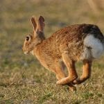 The Reason Behind Your Rabbit's Light Colored Poop