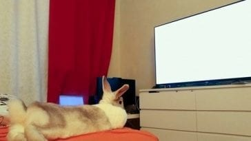 Do Rabbits Love Watching Movies?