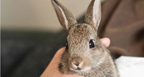 What You Need To Know Before Getting Rabbits as Pets