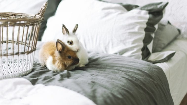 What Does It Mean When Your Rabbit's Pee Smells Like Ammonia?