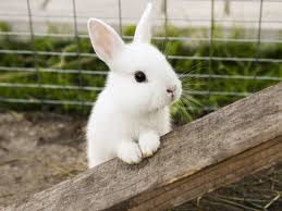 Description: How to calm a scared rabbit? | Rabbits and Fireworks | Vets Now