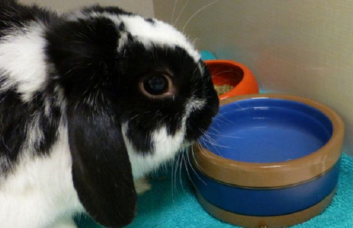 Description: What To Do When You See Red In Your Rabbit's Urine